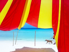 hiding place (noe_carrillo) Tags: dog beach umbrella colorful walk philippines tent boracay whitesand magical naturesfinest supershot nokian73 impressedbeauty wowiekazowie flickrdiamond superhearts pcp2011