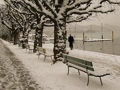 winter morning (Marlis1) Tags: trees winter lake snow water wow switzerland lucerne 100vistas outstandingshots holidaysvacanzeurlaub