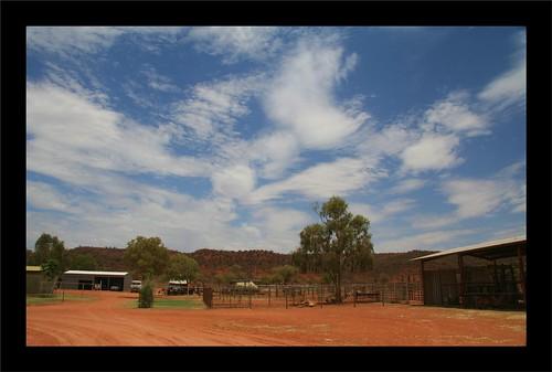 Camel Farm near Alice Springs