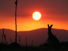 down under sunset