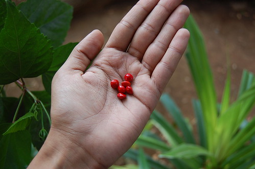 Seeds in the garden by Advait Supnekar, on Flickr