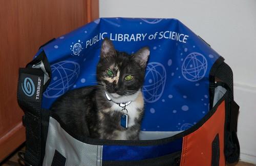 PLoS Cat