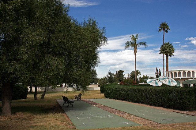 Palm Trees and Cactus: Winter Palms and Shuffleboard