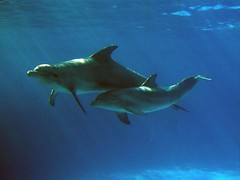 Dolphins (Christian Frlich) Tags: sea mar dolphins mammals delfines mamiferos