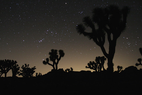 Joshua Tree Orion