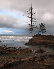 Washaway . 2 (Steven Schnoor) Tags: ocean travel trees winter usa cloud seascape color colour tree art tourism beach nature water colors vertical clouds landscape outdoors daylight photo washington bravo colours outdoor  scenic environmental location tourist pacificnorthwest environment steven washingtonstate dramaticsky pnw feature washingtoncoast attraction saltwater lonelytree willapa northcove westernwashington schnoor saywa pacificcounty experiencewa imagesmyth experiencewashington wstpic07 stevenschnoor stevenschnoor