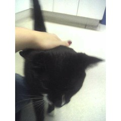 Gawain at the Vet