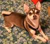 Little Man (~Kim's Picture Gallery~) Tags: dog pet love animal sweet cutie littleman impressedbeauty