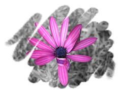 Entangled (SantiMB.Photos) Tags: flowers bw flores macro cutout psp desaturation paintshoppro desaturacin flickrsbest abigfave artlibre anawesomeshot goldenphotographer wowiekazowie