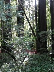 IMG_2015.JPG (letterknit) Tags: california redwoods redwoodnationalpark