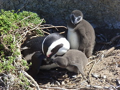 Sydafrika feb 2007 451