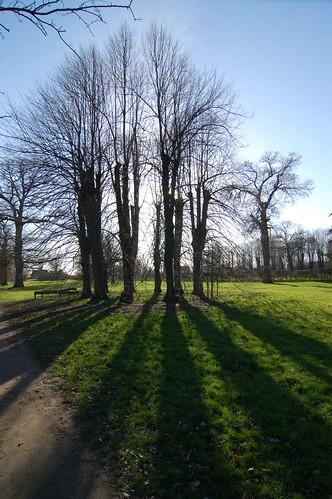 Jesteburg - jersberg trees