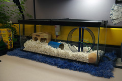 Hammy's New 20gal Home