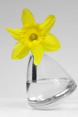 Narzisse (rek photography) Tags: flowers nature yellow spring nikon natur pflanzen explore gelb blume farbig bunt farben frhling narzisse osterglocke frhjahr flickrsexplore d80