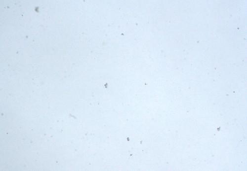 Snowin' again!