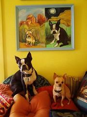 dogs and their portrait2 (EllenJo) Tags: dog pets chihuahua dogs painting bostonterrier artwork ivan paintings az floyd dogart ellenjoroberts ellenjdroberts ejdroberts ellenjocom