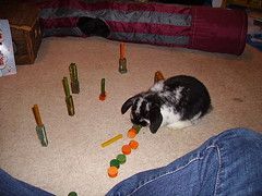 Timmy plays 'knock down the wood chew towers'