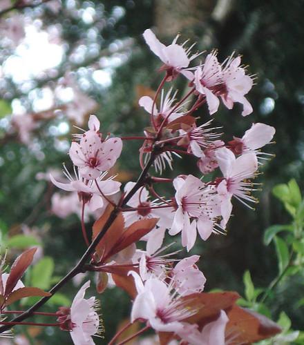 spring (see)