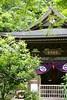 Obai-in (Giant Ginkgo) Tags: green japan temple spring kamakura zen verdant engakuji lush kitakamakura zentemple obaiin