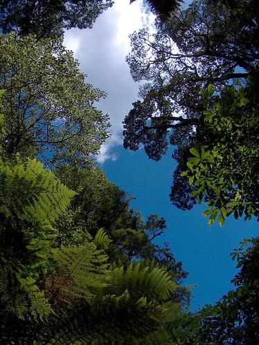 13yi-TeWhaitiNuiatoiTrees