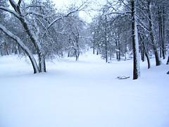 Snow/Tree