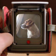 Daisy TV - by John Kratz