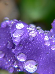 purple rain - by samdiablo666