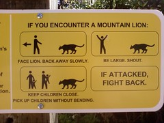 Mountain Lion Safety (ekai) Tags: sign yellow moblog safety ridiculous mountainlion shout skylinedrive fightback belarge ifattackedfightback facelion keepchildrenclose backwawayslowly pickupchildrenwithoutbending