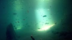 Murky Waters (Brian G. Wilson) Tags: fish green underwater photoblog caustics murky
