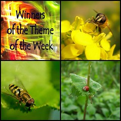 Winners of the Theme of the Week: Bugs