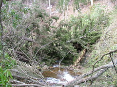 Downed Trees 3