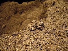 Soil (eternalgratitude) Tags: vegetables garden gardening outdoor soil dirt vegetablegarden