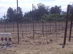 new vineyard 2007
