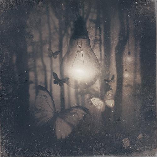 Licht leven