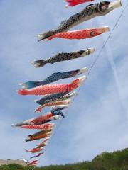 鯉のぼり / Carp streamer