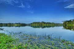 Green & Blue (DanielKHC) Tags: morning blue sky green nature water reflections landscape interestingness bravo singapore sony reservoir explore lower alpha hdr a100 peirce naturesfinest photomatix tonemapped interestingness215 5xp tamron1118mm 25faves lowerpeircereservoir danielcheong hdrenfrancais goldenphotographer diamondclassphotographer flickrdiamond flickrphotoaward danielkhc