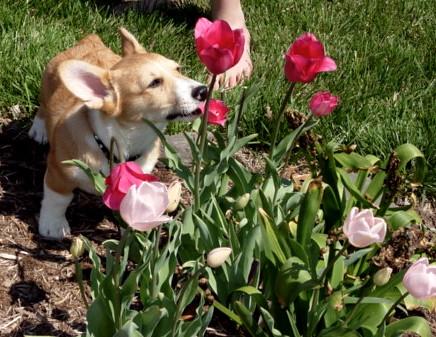 tasting the flowers...