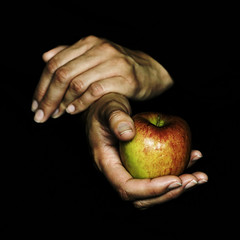 . The Apple Harvest II . (3amfromkyoto) Tags: woman apple fruit hands bravo hand fingers harvest nails ii 3amfromkyoto artlibre artlibres flickr:user=3amfromkyoto