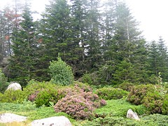 Végétation de la plaine d'Uovacce