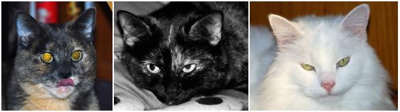 Cat Mugshots