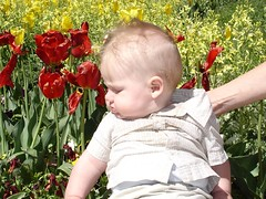 Charlie in the tulips