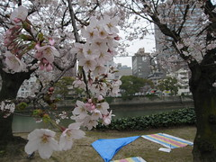 Sakura (jasonkrw) Tags: trees party flower japan river hiroshima 桜 sakura cherryblossoms hanami 広島 花見