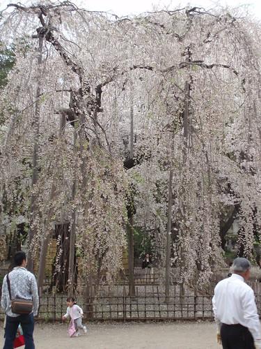 كيوتو (بالـيابانية: 京都 = kyōto) 443505356_a59a0dccd3