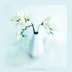 FREESIA (AlexEdg) Tags: flowers stilllife art lensbaby nikon lace d70s vase lensbabies freesia postprocessing alexedg alledges diamondclassphotographer flickrdiamond