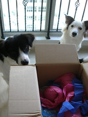 Millie and Mollie inspect the parcel