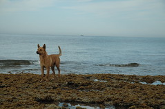 Living Carefree (bandanamomaz) Tags: beach mexico tidepools rockypoint