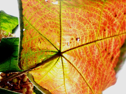 Leaf, Park Güell, Barcelona