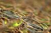 Springtime in the woods (~Glen B~) Tags: uk england bed woods nikond70 cleveland springs teesside matress marske errington nikon50mm18d satelliteportfolio