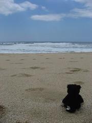 kitty enjoying the beach