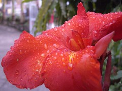 Red Flower (mePraP) Tags: flowers blue red flower macro green drops manual waterdrops